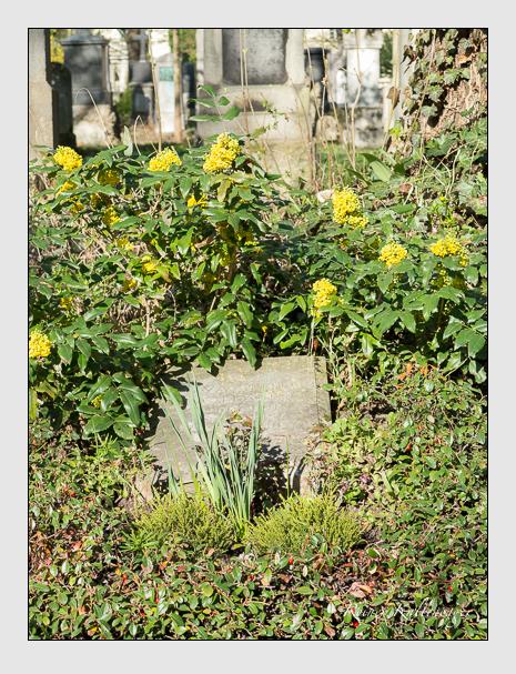 Grab der Familie Holland auf dem Alten Südfriedhof München (März 2014)