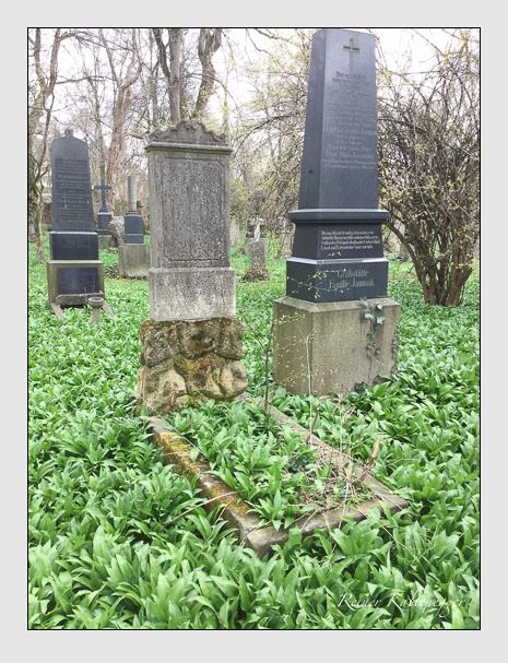 Grab der Familie Dippold auf dem Alten Südfriedhof München (April 2018)