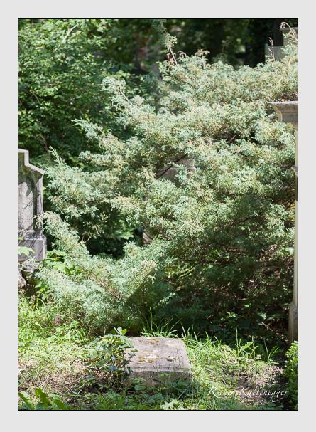Grab der Familie Schubert auf dem Alten Südfriedhof München (August 2007)