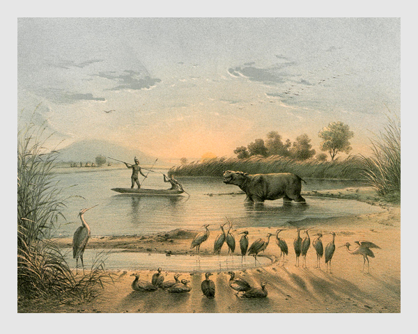Johann Martin Bernatz: Nilpferd-Jagd. Abbildung aus »Wilhelm von Harnier's Reise am oberen Nil«. Darmstadt, 1866.