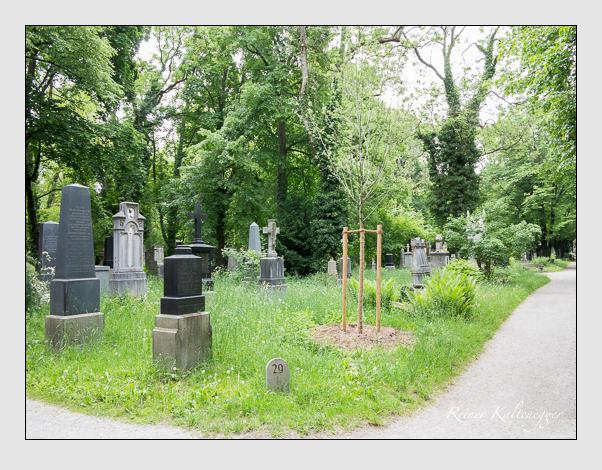 Gräber der Sektion 29 auf dem Alten Südfriedhof München: Westseite (Mai 2020)