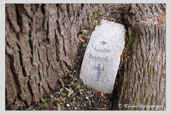 Grab des Hamsters Friedrich auf dem Alten Südfriedhof München (Februar 2021)
